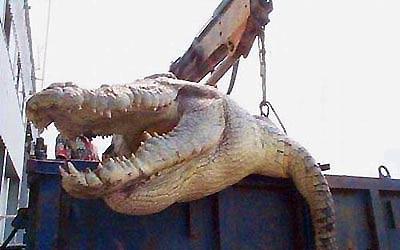Пойман крокодил-людоед, съевший более 80 рыбаков. - 20061102201128421_1