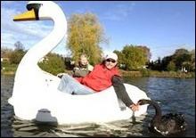 Лебедь влюбился в пластиковый катамаран - 20061109193003727_1