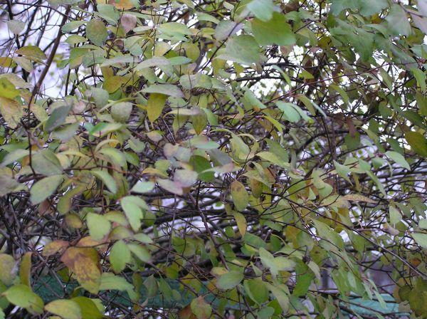 Осень на Оболони - 20061117093345375_7