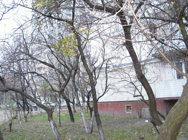 Прогулка по Оболони в воскресенье - 20061119204419260_37