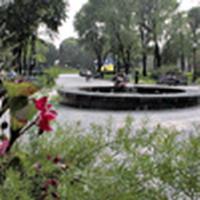 В Киеве могут появиться три памятки природы - 20061120183537657_1