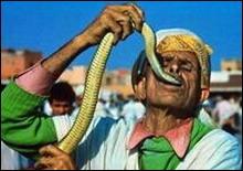 Умер знаменитый заклинатель змей из Малайзии - 20061203184533201_1