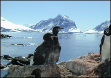 Антарктика в прошлом неоднократно лишалась льда - 20061207193831778_1