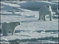 Арктика может лишиться вечного льда к 2040 году - 20061212194252830_1