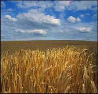 Теплая зима ударит по карманам аграриев - 20070112160115557_1