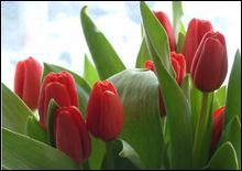 Украинские мужчины потратят на цветы 80 млн гривен - 20070307213309984_1