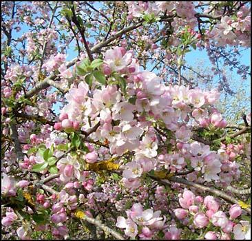 В Украину идет настоящая весна! - 2007032018054216_1