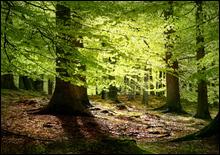 Высадка деревьев усиливает глобальное потепление - 2007041023594212_1