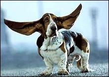 Ученые выяснили, почему собаки виляют хвостом - 20070430235055245_1