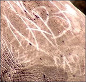 Посетитель зоопарка изрисовал носорога - 20070517191857126_1