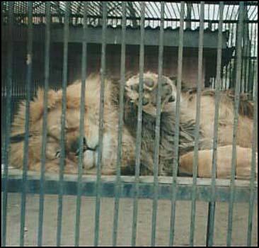 Киевский зоопарк на грани развала - 20070604181458992_1
