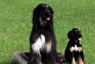 Корея поставит клонированных собак на борьбу с наркотиками - 20070710175701152_1
