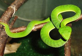 Ученые разгадали секрет длительных голодовок змей - 2007082112410412_1