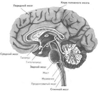 Тест. Протестируйте свой мозг - 2007092615265171_1