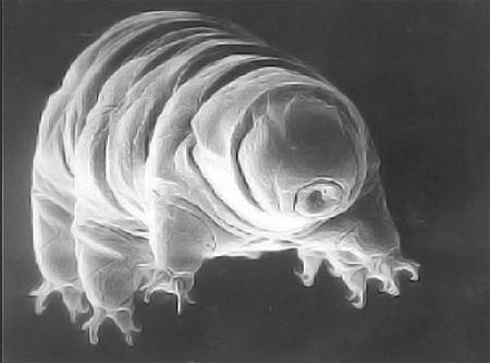 Самые живучие существа на Земле - 20071021112431351_1