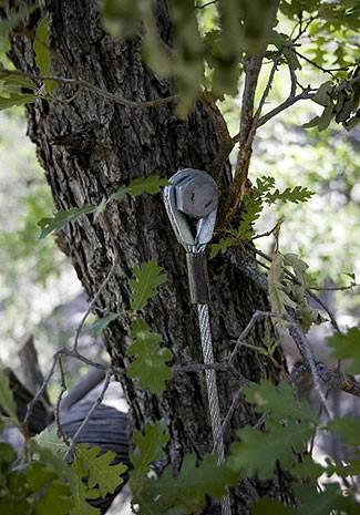 Домик на дереве в Беверли Хилз (7 фото) - 20071023200624392_3
