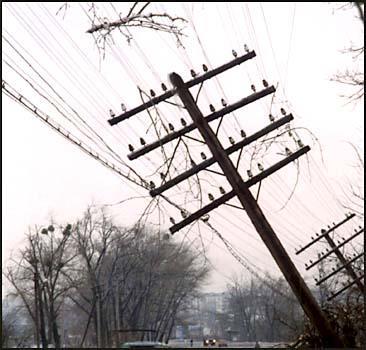По всей Украине объявлено штормовое предупреждение! - 20071106190139949_1