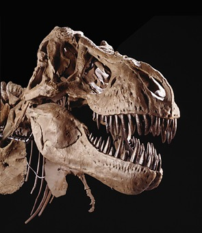 Конспирологическая теория о динозаврах - 20071122181417792_1