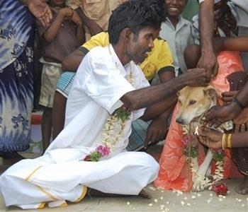 В Индии мужчина женился на собаке - 20071122181518189_1