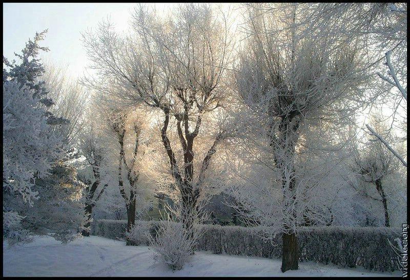 Зимние виды (25 фото) - 20071126162851121_13