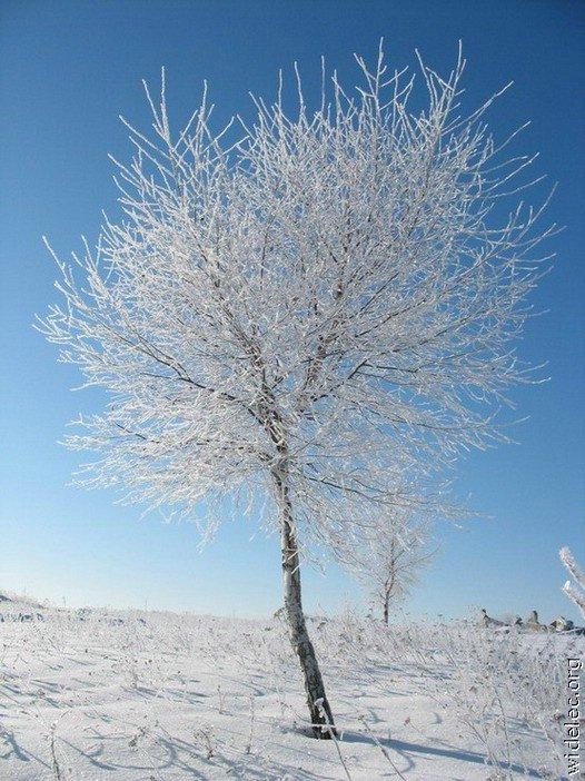 Зимние виды (25 фото) - 20071126162851121_15