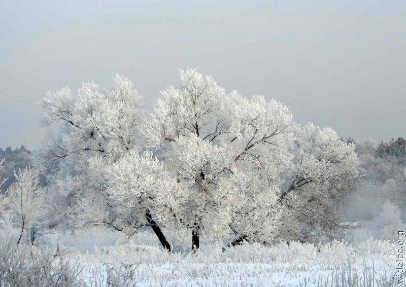 Зимние виды (25 фото) - 20071126162851121_18