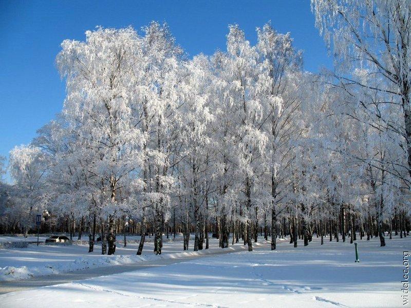 Зимние виды (25 фото) - 20071126162851121_21