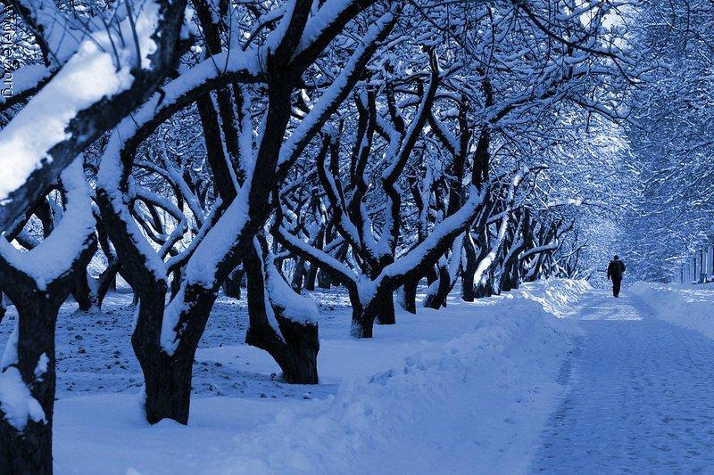 Зимние виды (25 фото) - 20071126162851121_22
