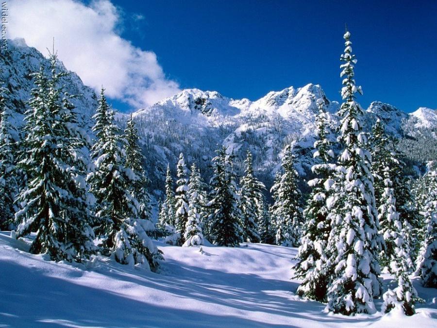 Зимние виды (25 фото) - 20071126162851121_24