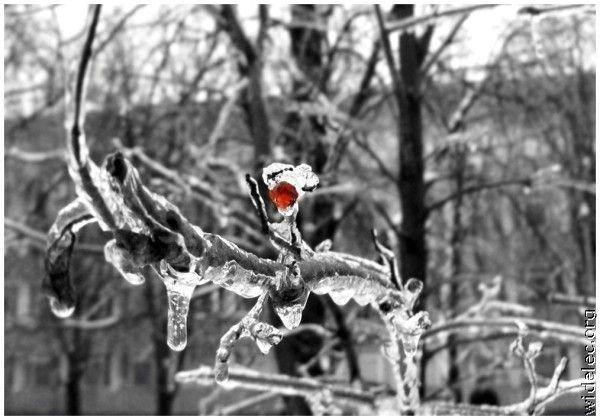 Зимние виды (25 фото) - 20071126162851121_4