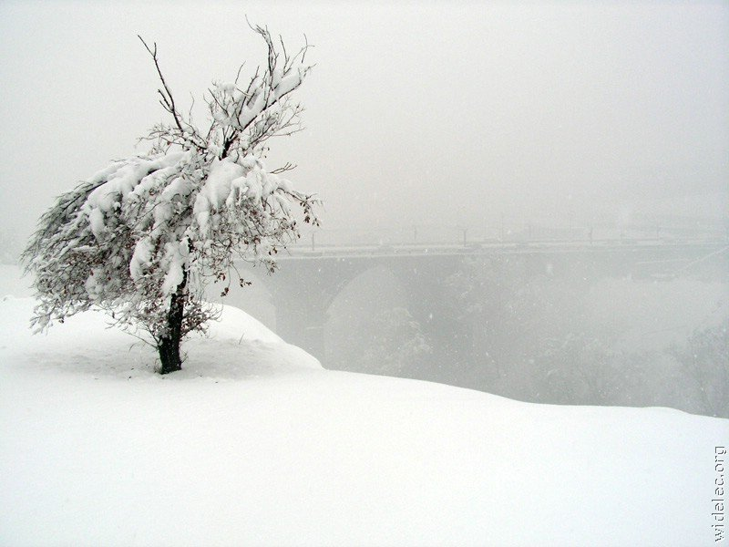 Зимние виды (25 фото) - 20071126162851121_6