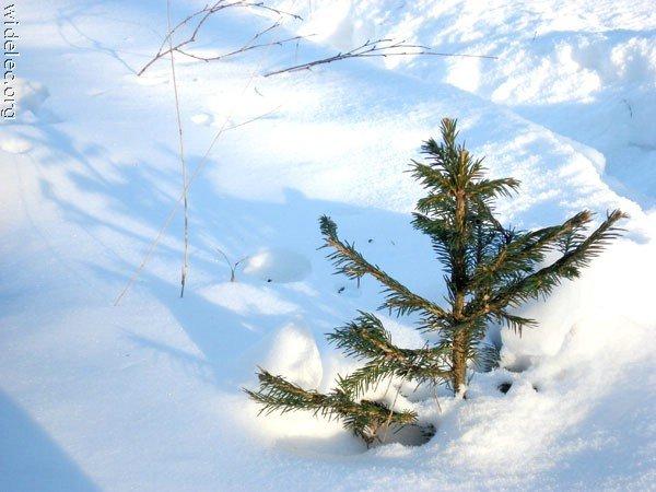 Зимние виды (25 фото) - 20071126162851121_7