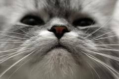 Для чего усы коту? И прочим млекопитающим… - 20071207235016203_1