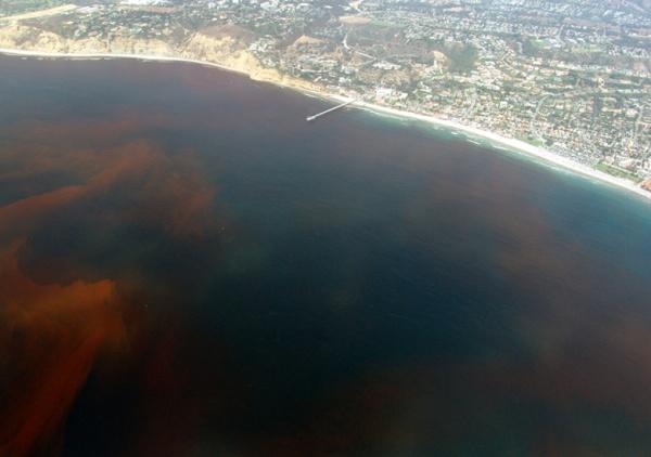 Природный феномен – красный прилив - 20071213003744799_1