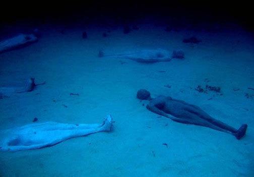 «Молиньере» – единственный в мире парк подводных скульптур - 20071216152217411_5