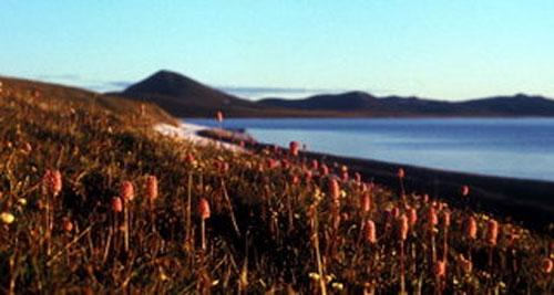 Озеро «нетающего льда» поведает о будущем планеты - 20071217160606799_10