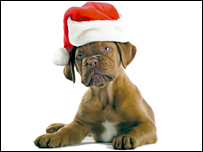 Для собак записали музыкальный диск  - 20080219134312495_1
