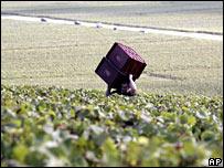 Франция расширяет территорию Шампани  - 20080314105749100_1