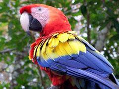 Попугай научил своих друзей ругаться матом - 20080410101848171_1
