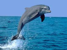 Двое британцев осуждены за приставание к дельфину    - 20080418103315548_1