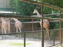 В Киевском зоопарке ежедневно будут давать бесплатные представления  - 20080625135647164_1