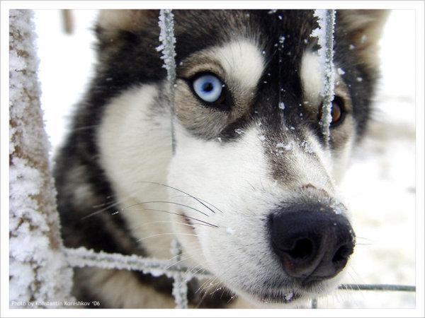 В Четверг 26 марта пропала собака на Оболони - 26marta-propala-sobaka-na-Oboloni_1