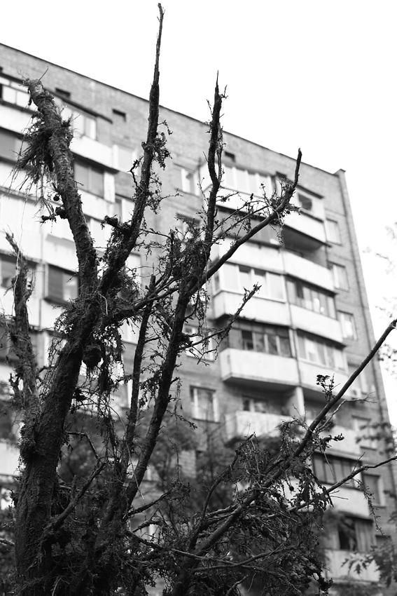 4 июня  2012 после дождя на Оболони (5 фото) - 4-ijunja-2012-posle-dozhdja-na-oboloni-5-foto_3