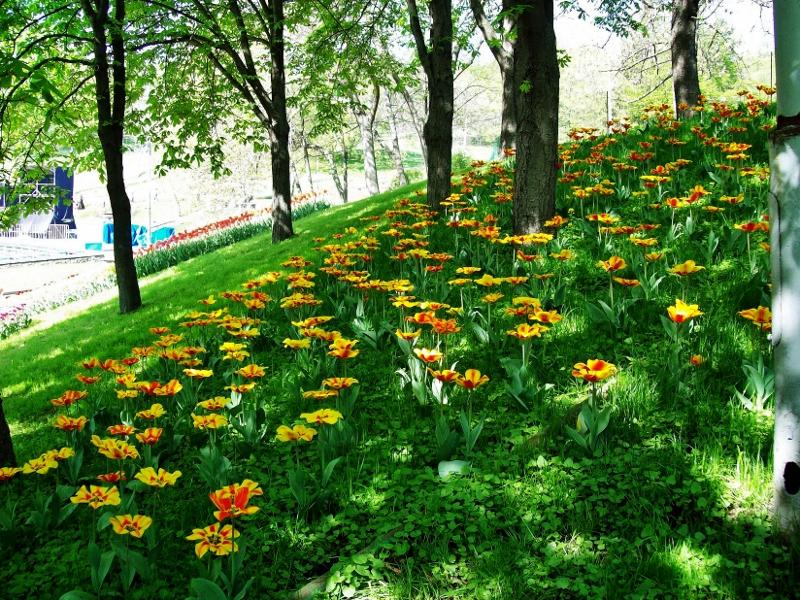 Выставка цветов в Киеве - vystavka-tsvetov-v-kieve_1