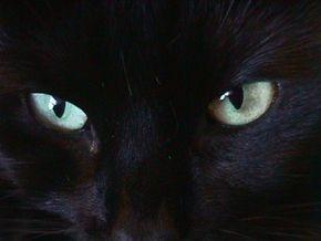 У китайского мальчика-кота в темноте светятся глаза - y-kitayskigo-mal4ika-kota-v-temnote-svet_1